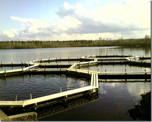 Водоемы, пригодные для разведения рыбы