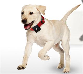 отслеживающее устройство для животных Puppy