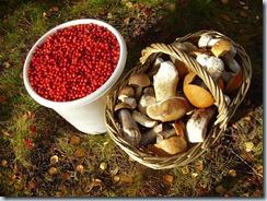 лесные грибы и ягоды