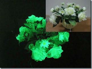цветы светящиеся в темноте